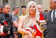 Photo of Lady Gaga recupera ilesos sus costosos perros tras violento robo